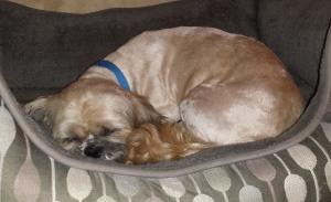 2016 7.24 Scruffy sleeping